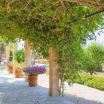 Ferienhaus Mallorca 6630 Terrasse mit Bouganvillea