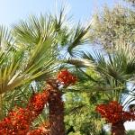 Ferienhaus Mallorca MA7420 Palmen