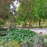 Ferienhaus Pollensa 8385 Garten mit Teich
