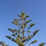 Ferienhaus Mallorca 5649 - Garten mit Bäumen