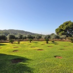 Ferienhaus Mallorca 5649 - großer Garten mit Rasen