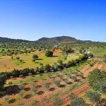Finca S'Horta MA5656 Olivenbäume