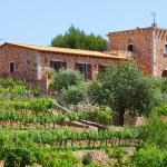 Finca S'Horta MA5656 Weinreben