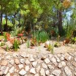 Finca S'Horta MA5656 exotische Pflanzen