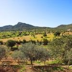 Finca S'Horta MA5656 umliegende Landschaft