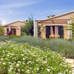 Luxus Ferienhaus Mallorca 5641 Garten mit Lavendel und Margeritenbüschen