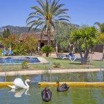 Finca Mallorca MA4170 Teich mit Schwänen