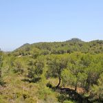 Ferienhaus Mallorca MA3965 Ausblick