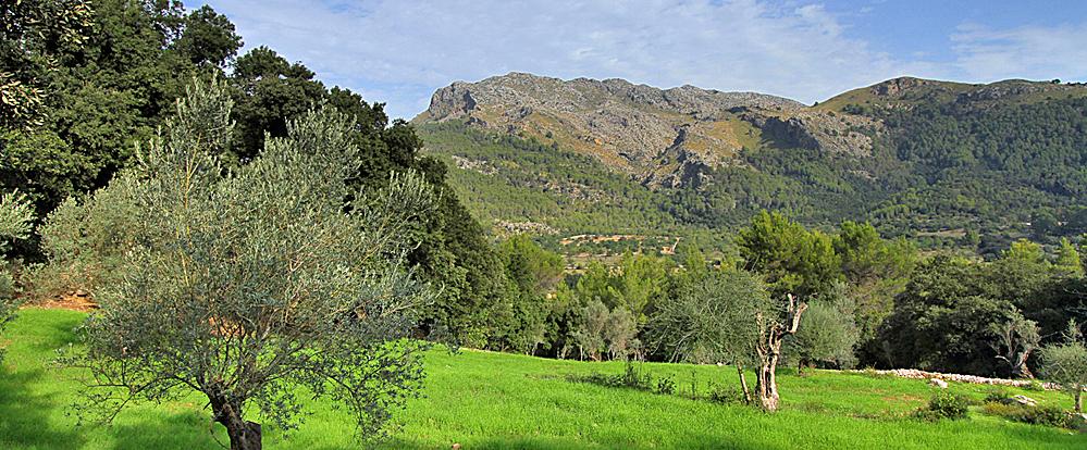 Finca Mallorca MA3505 - Blick auf die Berge