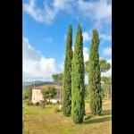 Ferienhaus Toskana TOH860 - Bäume