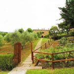 Ferienhaus Toskana TOH865 Weg zum Ferienhaus