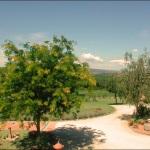 Ferienhaus Toskana TOH950 - Garten