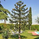 Ferienhaus Toskana TOH465 - Gartenanlage
