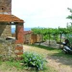Ferienhaus Toskana TOH310 - Auffahrt zur Finca