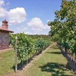 Ferienhaus Toskana TOH320 - Obstbäume