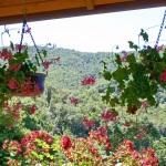 Ferienhaus Toskana TOH365 - Blumen