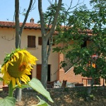 Ferienhaus Toskana TOH405 - Haus