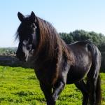 Luxus-Ferienhaus Mallorca MA2301 Pferd