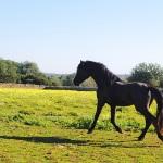 Luxus-Ferienhaus Mallorca MA2301 Pferd (2)
