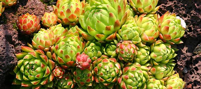Botanischer Garten auf Mallorca