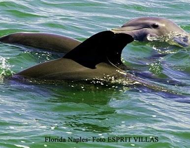 Delphine vor Naples