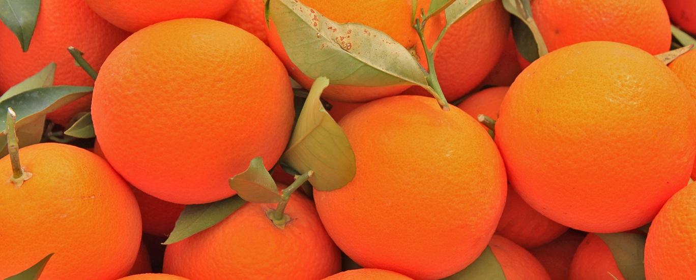 Orangen aus Zypern