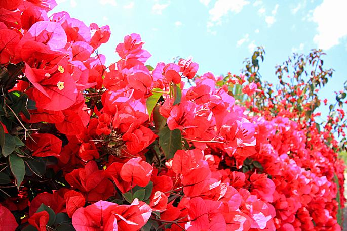 Blumen in Cas Concos