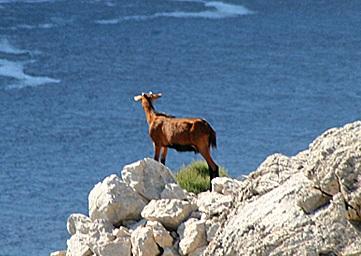 Cap Formentor im Norden von Mallorca