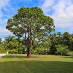 Villa Florida FVE32180 Garten