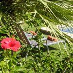 Ferienhaus Mallorca MA2050 Hibiscus im Garten