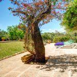 Finca Mallorca MA23487 Garten mit blühenden Büschen