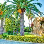 Ferienhaus Mallorca MA43507 Palmen im Garten