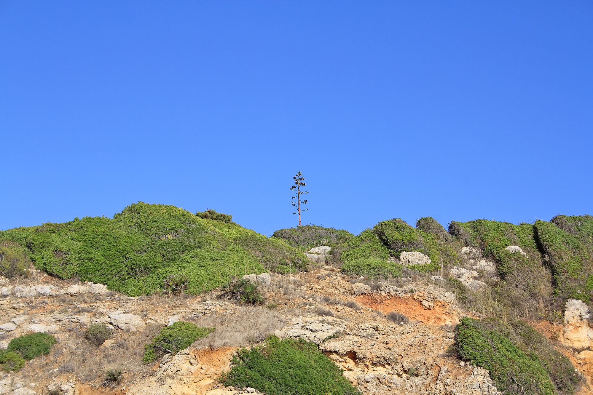 Praia da Coelha - Strand von Coelha 32