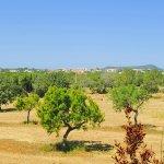 Ferienhaus Mallorca MA3890 Ausblick