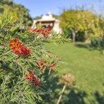 Ferienhaus Mallorca MA3989 Garten mit Büschen