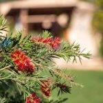 Ferienhaus Mallorca MA3989 blühende Büsche im Garten